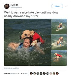 Viral Post About a Dog Trying To Drown His Owner Turns Into Hilarious Memes