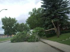 Trees down in NW Calgary