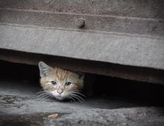 Walmart wants to exterminate a feral cat colony living next to one of its stores even though it's being managed by humans and all the cats are vaccinated and spayed or neutered. Sign to demand that Walmart leave these innocent animals alone.