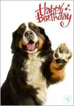 Latest Free bernese mountain dogs birthday Concepts More than decades, your Bernese Huge batch Pet dog is a huge foundation regarding village life in Switz Happy Birthday Art, Funny Happy Birthday Wishes, Puppy Birthday, Happy Birthday Quotes, Happy Birthday Greetings, Burmese Mountain Dog Puppy, Mountain Dogs, Bernese Mountain, Birthday Cards Images