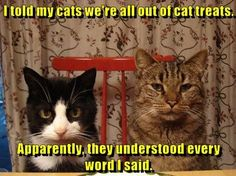 More Cat Care Information:It is often said that there are two kinds of people in the world-those who love cats and those who do not. Cat lovers are often Silly Cats, Crazy Cats, Cats And Kittens, Funny Cats, Cats Humor, Funny Horses, Ragdoll Kittens, Fat Cats, Memes Humor