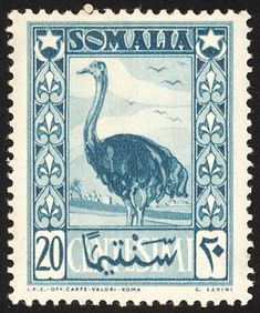 Somali Ostrich stamps - mainly images - gallery format