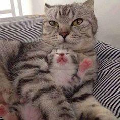 Another great mama cat and baby picture, I just can't get enough of them!