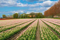 Holland, Netherlands - JaySi/Getty Images