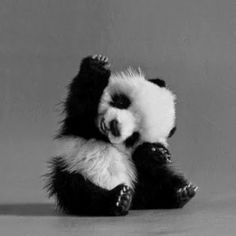 This is the cutest panda cub ever...