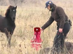 Wild Horse Found In Chains – Watch Him Thank His Savior