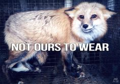 ETA (People for the Ethical Treatment of Animals)  The majority of U.S. fur comes from Chinese fur farms, where animals are beaten, stomped on, genitally electrocuted, & SKINNED ALIVE! http://peta.vg/1cfa