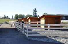 Wet weather paddocks with run-in sheds. PERFECT for wet and soggy winters to let them get the wiggles out! (Photo Credit: Pumpkin Farms)