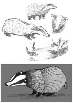 Matt Dawson, badger, sketch, drawing, character, design, illustration, nature