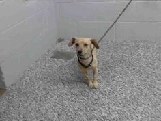 A463919~! <3 Chihuahua Mix • Adult • Male • Small. San Bernardino City Animal Control San Bernardino, CA. Petfinder.com is the worlds largest database of adoptable pets and pet care information. Updated daily, search Petfinder for one of over 300,000 adoptable pets and thousands of pet-care articles!