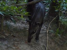 amazon rainforest french guiana #amazon more info http://www.braziltravelbeaches.com