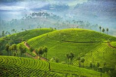 Among all the south Indian tourist places, Munnar Hill station is wonderful and it is the top in beautiful and it is favourite for the nature lovers and adventure seekers. Kerala Travel, Kerala Tourism, India Travel, Nature Photography, Travel Photography, Munnar, Kerala India, South India, Tourist Places