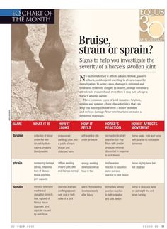 Does my horse have a Bruise, strain, or sprain - Horse Care - Horse Health Horses And Dogs, Show Horses, Horse Information, Horse Therapy, Horse Care Tips, Horse Anatomy, Horse Facts, Horse Grooming, All About Horses