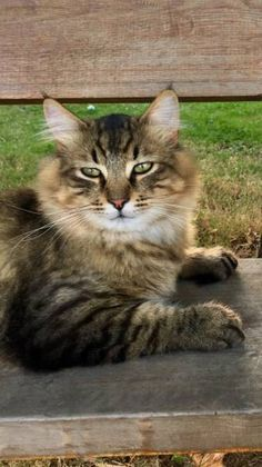 LOST CAT: 08/25/2017 - Albany, Oregon, OR, United States. Ref#: L36324 - #CritterAlert #LostPet #LostCat #MissingCat