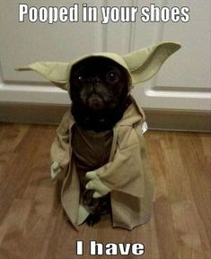 Two cute pugs dressed up in Star Wars costumes as Darth Vader (or should we say Bark Vader) and Yoda. Description from pinterest.com. I searched for this on bing.com/images #Pug