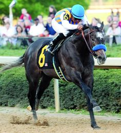 """As a multiple Group 1 winner and record-breaking two-year-old, The Factor was an oustanding racehorse, but what attracted us most to him was how perfectly he suits Australian breeding. He was brilliantly fast, so fast that his hall-of-fame trainer, Bob Baffert, described him a """"freak"""" and the fastest horse that he has ever trained. On the racecourse, The Factor did nothing to change this opinion. He broke his maiden in sensational style, out of the barriers like a rocket and just running…"""