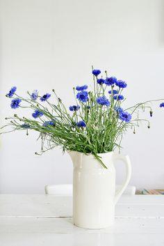 summer flowers | Flickr - Photo Sharing!