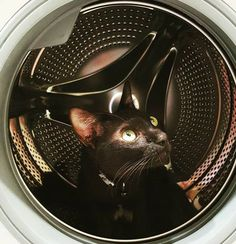 Gatita Cat | Pawshake