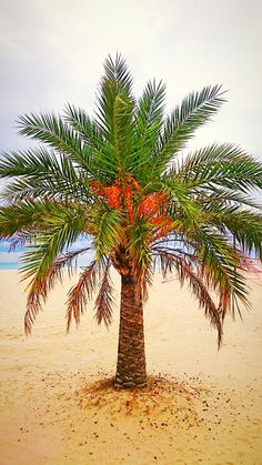 Palm My Photos, Palm, Plants, Flora, Plant, Planting