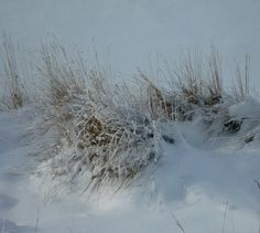 Shades of white: Scenes from a Prairie winter by peggyhr, via Flickr