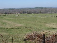 7/1   cedar bluff alabama | Cedar Bluff, AL : Feeding Cows close to Gaylesville Alabama photo ...