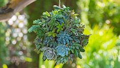 Hanging Succulent Ball- easy inexpensive and pretty.