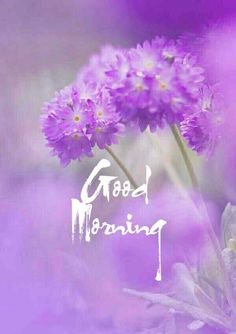 Beautiful good morning images with flowers Good Morning Gift, Good Morning Greeting Cards, Good Morning Massage, Good Morning Dear Friend, Good Morning Image Quotes, Good Morning Beautiful Quotes, Good Morning Texts, Good Morning Greetings, Good Morning Images Flowers