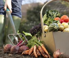 Vegetable Gardening for Beginners: Advice on plot size, which vegetables to grow, and other vegetable garden planning tips from The Old Farmer's Almanac. Planting Vegetables, Organic Vegetables, Growing Vegetables, Vegetable Gardening, Flower Gardening, Veggies, Vegetable Garden For Beginners, Gardening For Beginners, Easy Garden