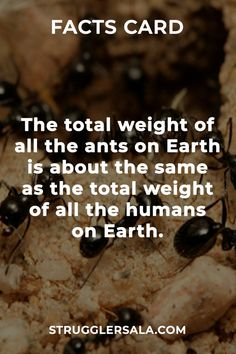 Struggle Facts, Quotes, Wallpapers and Stories Wierd Facts, Wow Facts, Intresting Facts, Real Facts, Funny Facts, True Facts, Weird, Interesting Science Facts, Interesting Facts About World