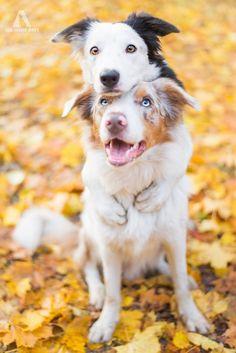 Puppy Love! Photographs by: Alicja Zmyslowska || Hannah Meinhard || Anne Geier || Anna Postnikova || Iza Łysoń