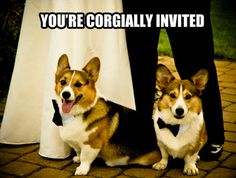 alternate wedding invitations. not happening, but cute!