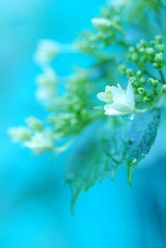 turquoise, white & green