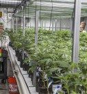 Review: Yerba Buena Farms - http://houseofcobraa.com/2016/09/24/44250/