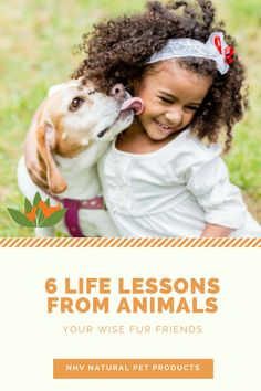 6 important life lessons to learn from your cat, your dog and other animals around you. A very interesting read for animal lovers and haters, both!