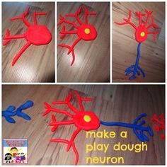 Make a play dough neuron from Albano Adventures in Mommydom Human Body Activities, Science Activities For Kids, Teaching Science, Life Science, Stem Activities, Biology Projects, Science Projects, Neuron Model, Brain Models