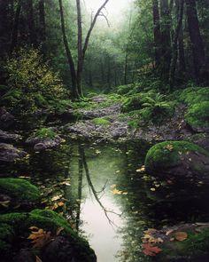 A solas con la naturaleza. Artista Adair Payne .. Discusión liveinternet - Servicio de Rusia Diarios Online