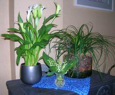 de lente in huis
