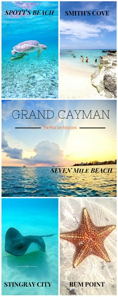 Booked a Caribbean Cruise Holiday? Check out our third installment on Grand Cayman http://www.fluffyhero.com/ #travel