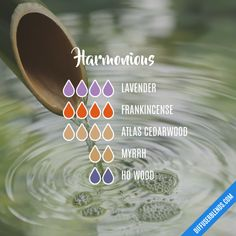Harmonious - Essential Oil Diffuser Blend Essential Oil Diffuser Blends, Essential Oils, Perfume, Floral, Flowers, Fragrance, Essential Oil Uses, Essential Oil Blends