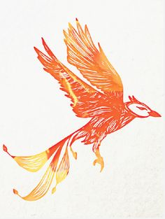 A Phoenix sighting.   University of Phoenix #UOPX