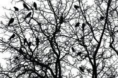 The Raven (Nr. 15025)  www.berlintapete.de