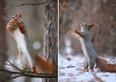 squirrel-photography-russia-vadim-trunov-15_R