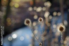 #sunny #day in #november