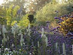 Lovely combination Sanguisorba canadensis and Verbena bonarensis