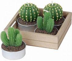 Cuidados del cactus: toda la información que buscas http://www.bonitadecoracion.com/2012/08/cuidados-del-cactus-toda-la-informacion.html