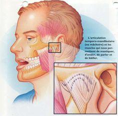 Un anti-stress à action mandibulaire, crânienne et cervicale - Bien être, santé, relaxation, massage, stress, shiatsu, Qi Qong; phytothérapie, remède de grand-mère
