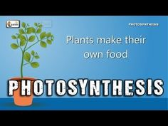 While humans and animals eat plants and other animals as food, plants can make their food using light and a process called photosynthesis. Photosynthesis is . Biology Lessons, Science Biology, Science Lessons, Teaching Science, Science Education, Science For Kids, Life Science, Teaching Plants, Cell Biology