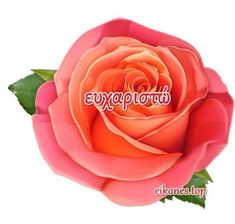 Thankful, Beautiful, Rose, Flowers, Plants, Quotes, Greek, Deutsch, Quotations