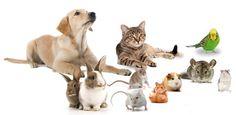 kedi ve köpekler için birbirinden farklı modellerde tasmalar , papyonlar, yataklar, taraklar ,oyuncaklar ,mama kapları....vs kuş ve hamsterlarınız için kafesler çeşit ve model seçenekleriyle pintistore.com 'da