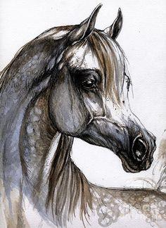 arabian horse photos - Google Search